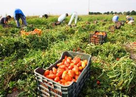 Immigrati-nei-campi della Capitanata (www.blogsalerno.it)