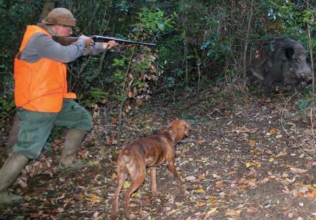 Legge regionale caccia, ambientalisti chiedono confronto Il Disegno di Legge non inibisce la possibilità di liberare animali