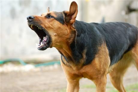 Cane disturba il vicino il padrone non ne risponde penalmente for Cane che abbaia