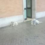 Dog trainer: Leone aggressivo? In Stazione a Foggia sempre mite