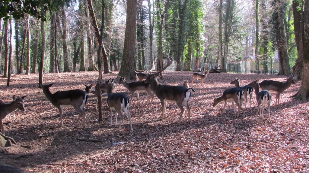 """""""La Foresta Umbra è patrimonio mondiale dell'UNESCO"""" La Foresta Umbra ospita un grande numero di specie animali"""