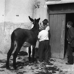 La memoria delle mani, le fotografie di Sirio Taddei in mostra al Rettorato