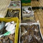 Stagione-delle-Seppie-Piccola-pesca-Muterine