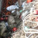 Stagione delle seppie 2007 eccezionale della pesca delle seppie sottocosta con reti