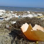 rifiuti-rivierasudamanfredonia (5)