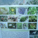 11. - Cartellonistica -Flora e Fauna Garganica