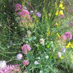 12. - Piante e fiori lungo il percorso