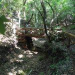 46. - Ponte in legno  durante il percorso x l'Abbazia di Pulsano
