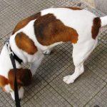 dognews (archivio)