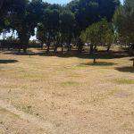 asemanfredonia-st (10)