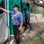 Sequestro piantagione marijuana di oltre 6 ettari nel Foggiano. 3 arresti