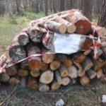 Furti di legna Monte Sant'Angelo