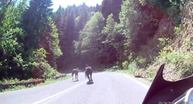 Cavalli sulle auto lungo la Mattinata-Vieste? Mega Bufala! Incidente avvenuto in Romania