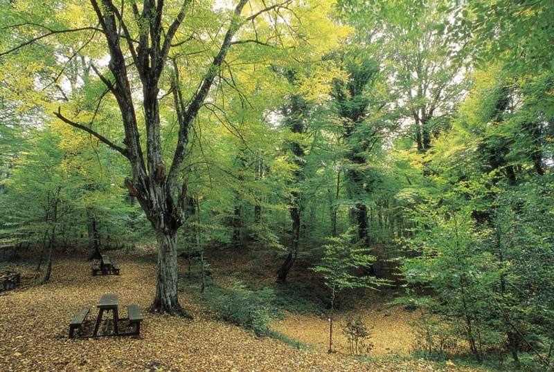 Conferenza stampa riconoscimento UNESCO faggete Foresta