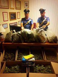 """""""Carabinieri scoprono """"laboratorio della marijuana"""" a Zapponeta: 3 arresti"""" è bloccato  Carabinieri scoprono """"laboratorio della marijuana"""" a Zapponeta: 3 arresti"""