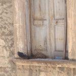 """Manfredonia, degrado in Via Rivera – Via Opacchiasella, cittadini """"Intervenire"""""""
