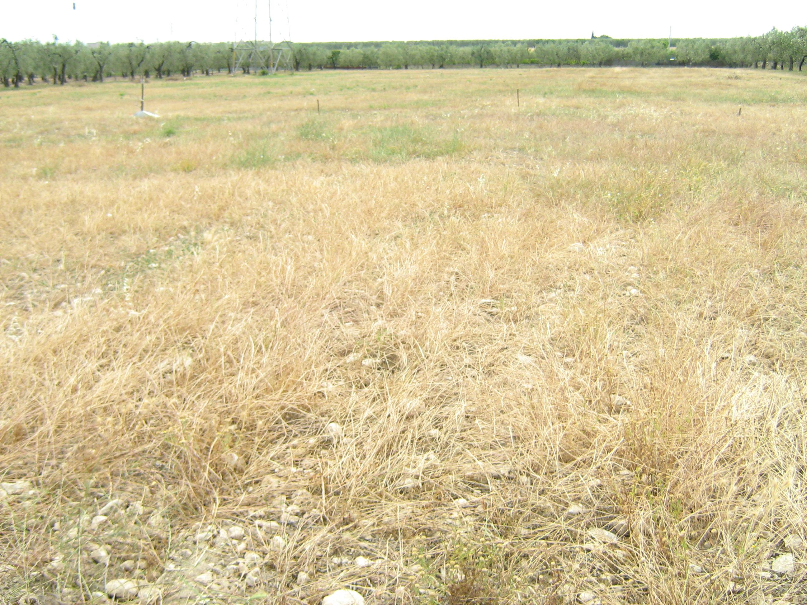 Grano, terreni agro di Monte Sant'Angelo (Ph: Stato)