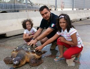 La tartaruga ritrovata dal pescatore di Barletta