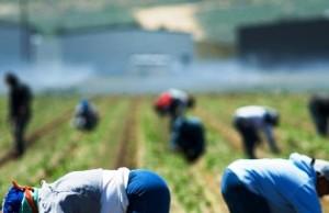 Operazione Nil Foggia, falsi braccianti agricoli