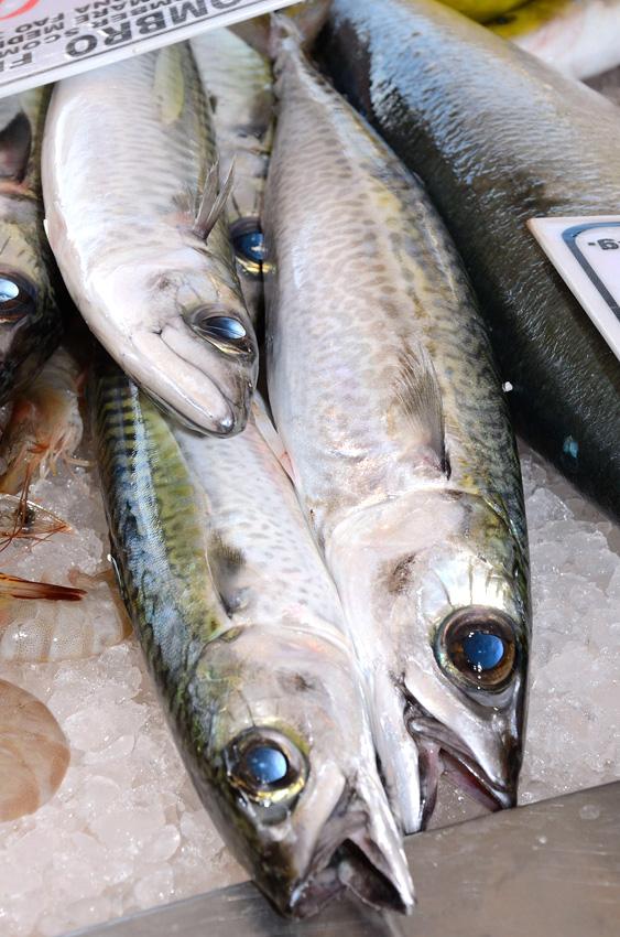 Pesce azzurro Manfredonia (FOTO RENATO) IMMAGINE D'ARCHIVIO