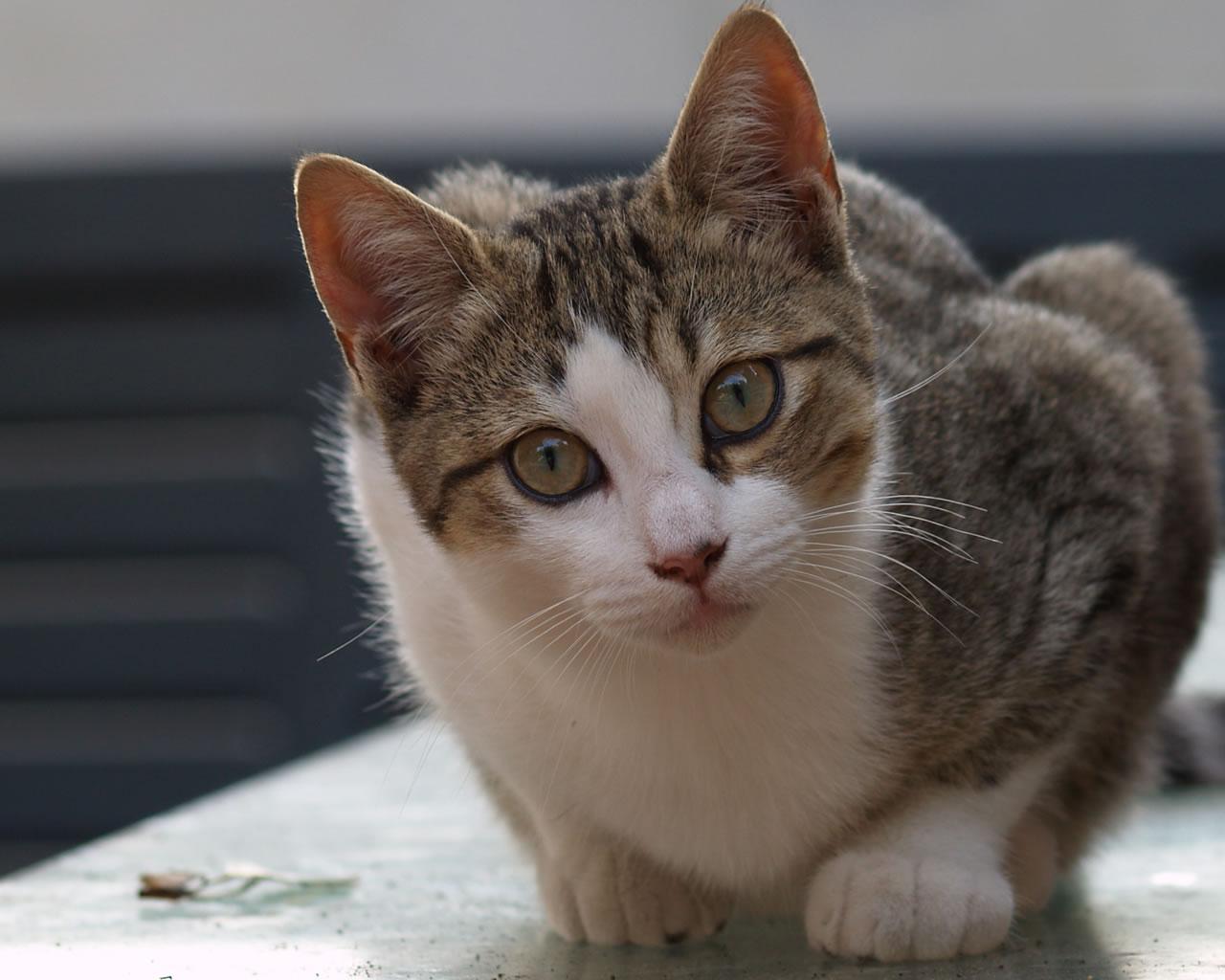 immagini gatti cani